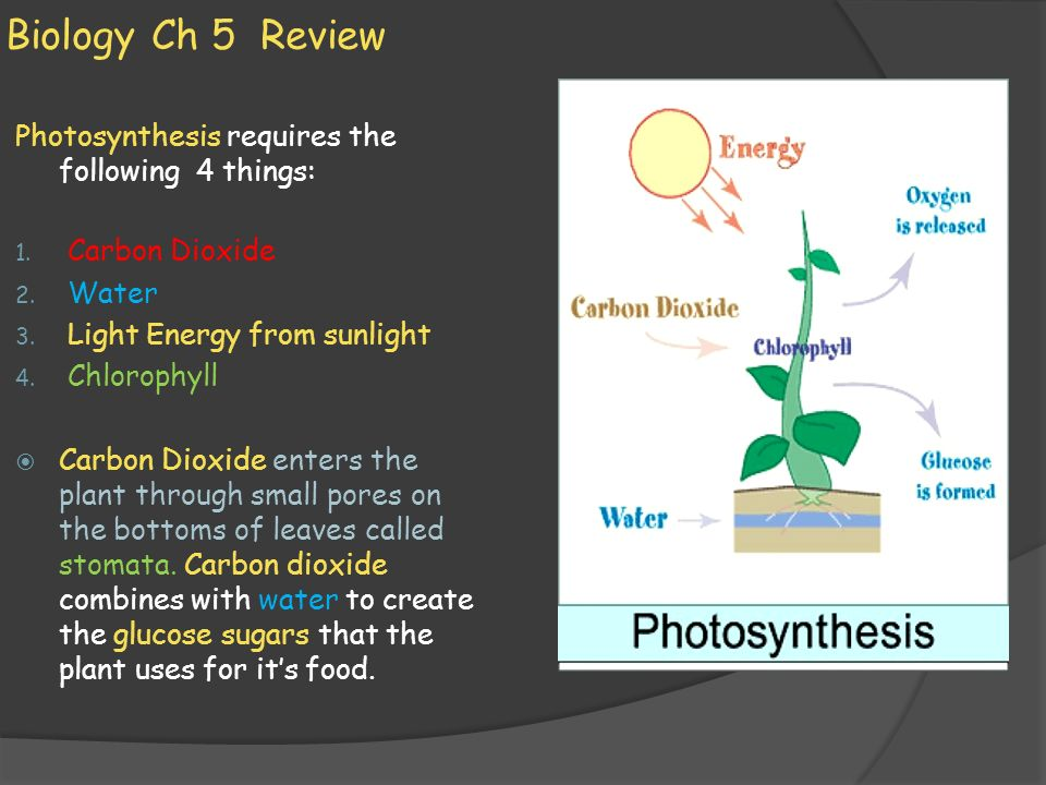 Biology Ch 5 Review Photosynthesis requires the following 4 things: