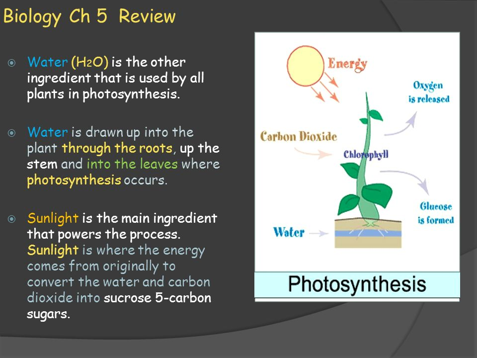 Biology Ch 5 Review Water (H2O) is the other ingredient that is used by all plants in photosynthesis.