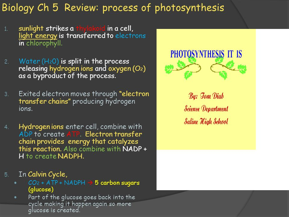 Biology Ch 5 Review: process of photosynthesis