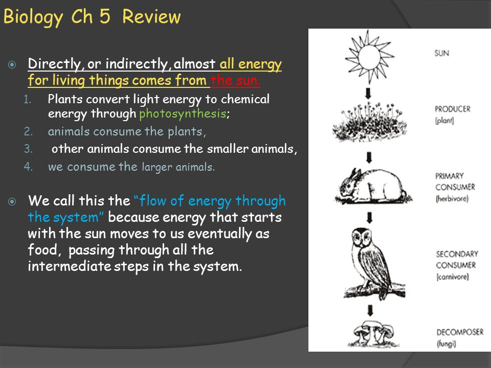 Biology Ch 5 Review Directly, or indirectly, almost all energy for living things comes from the sun.