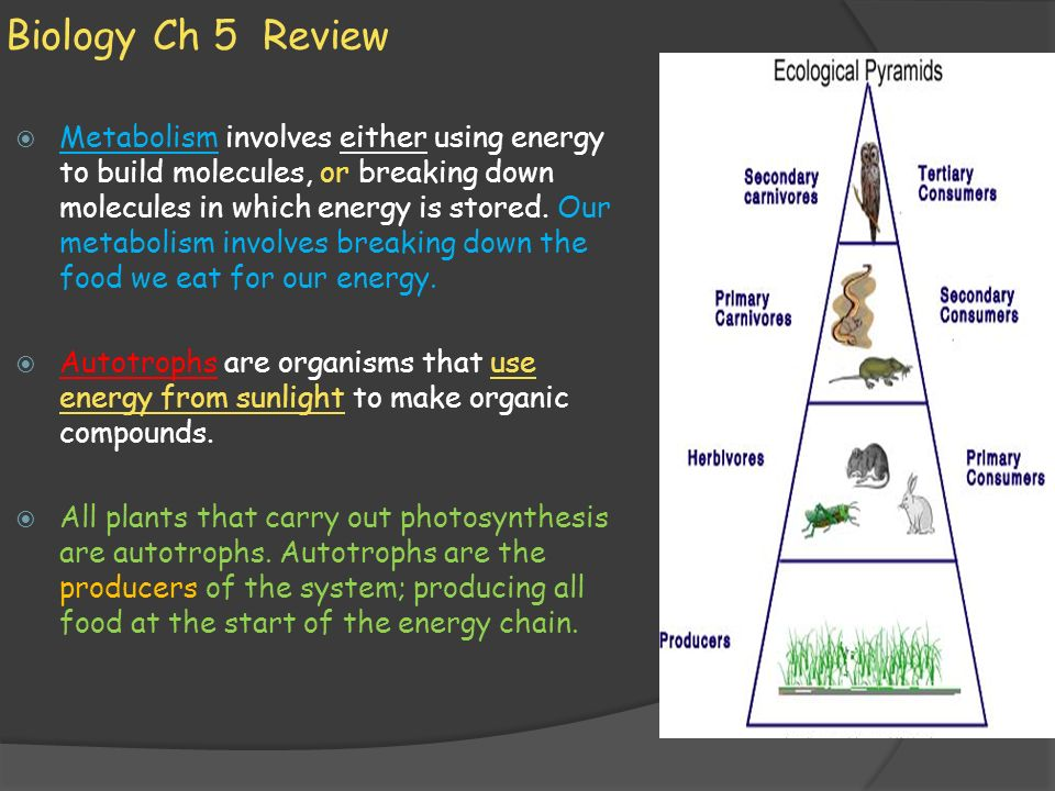 Biology Ch 5 Review