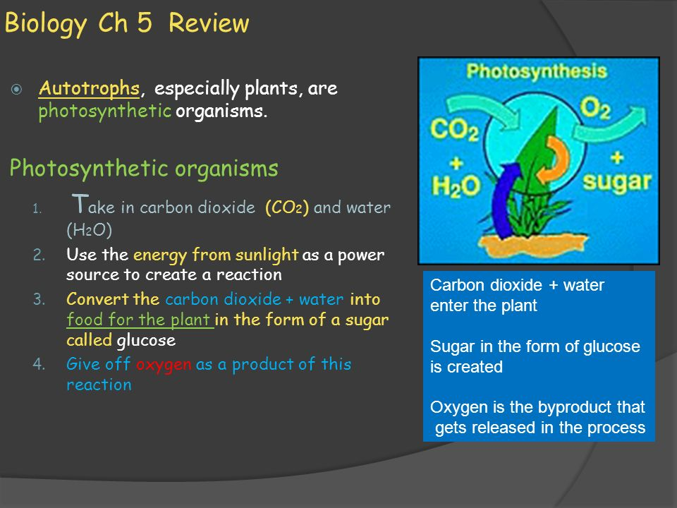 Biology Ch 5 Review Photosynthetic organisms
