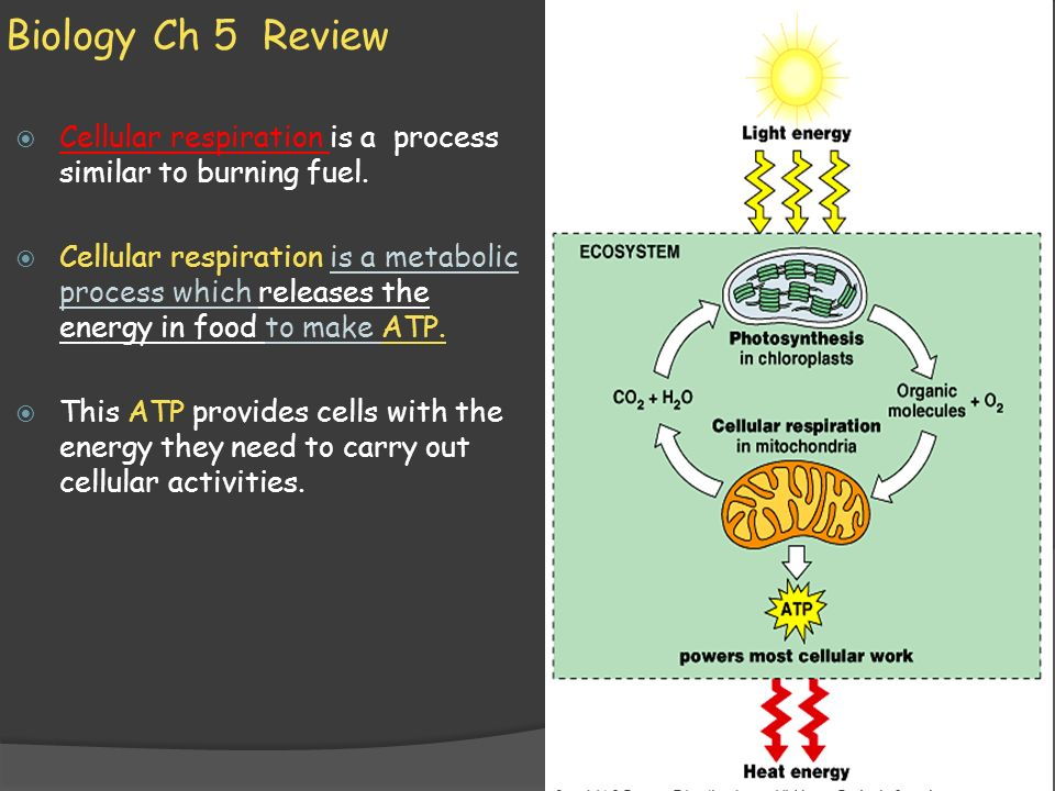 Biology Ch 5 Review Cellular respiration is a process similar to burning fuel.