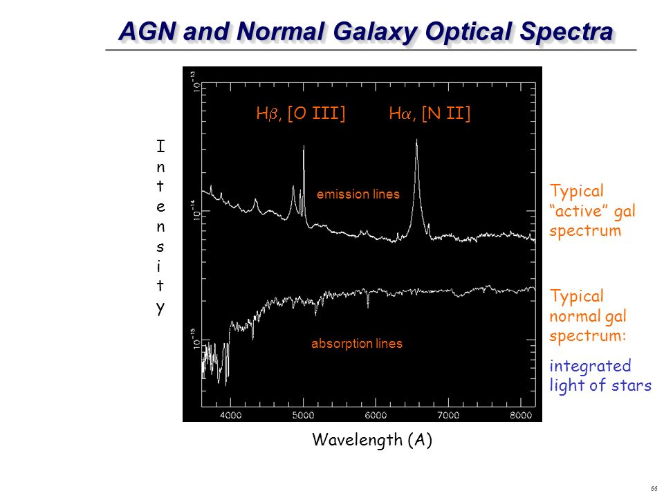 AGN and Normal Galaxy Optical Spectra