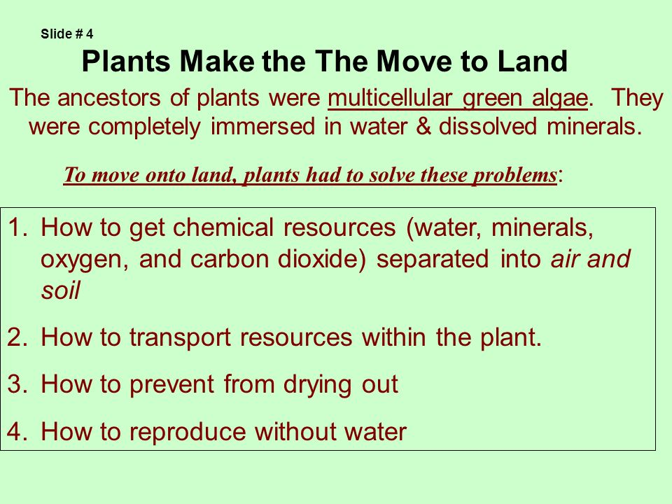 Plants Make the The Move to Land