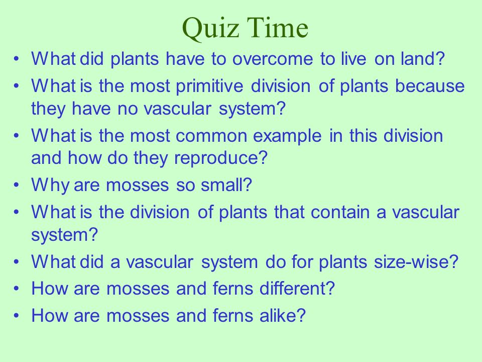 Quiz Time What did plants have to overcome to live on land
