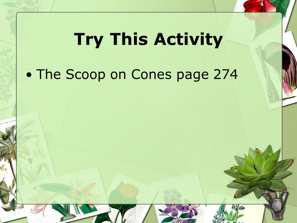 Try This Activity The Scoop on Cones page 274