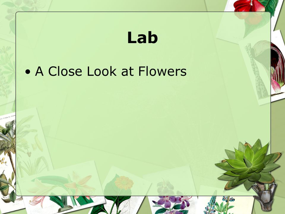 Lab A Close Look at Flowers