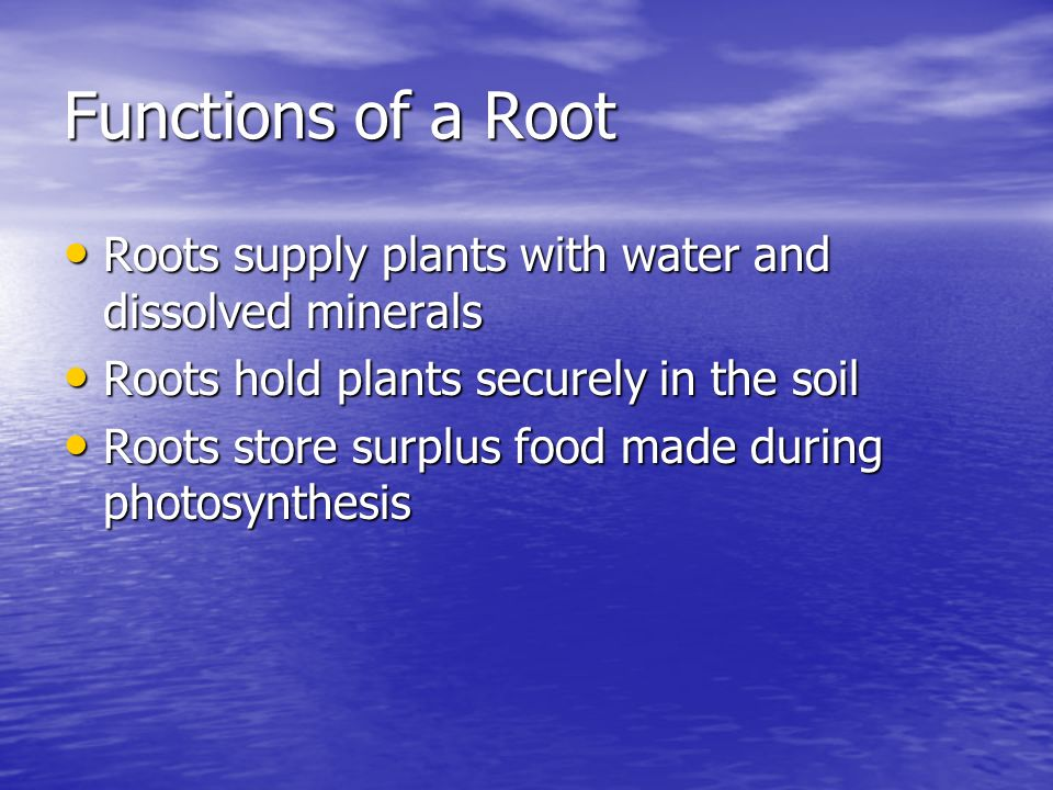 Functions of a Root Roots supply plants with water and dissolved minerals. Roots hold plants securely in the soil.