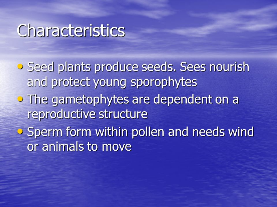 Characteristics Seed plants produce seeds. Sees nourish and protect young sporophytes. The gametophytes are dependent on a reproductive structure.