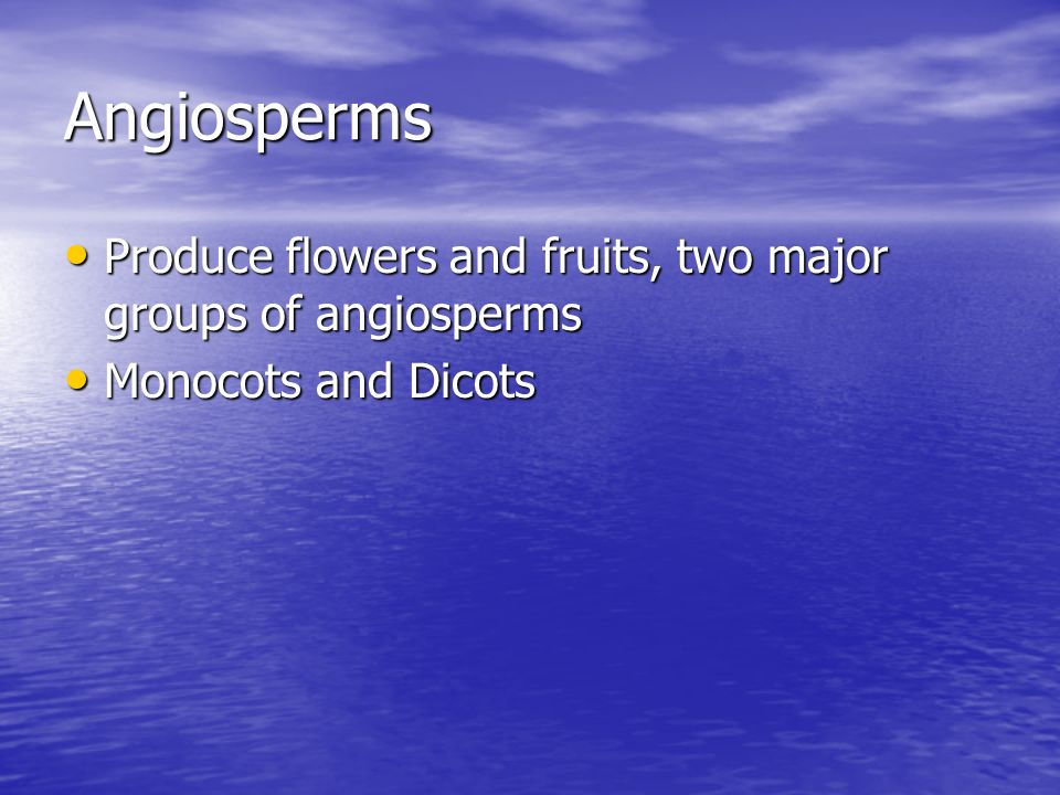 Angiosperms Produce flowers and fruits, two major groups of angiosperms Monocots and Dicots