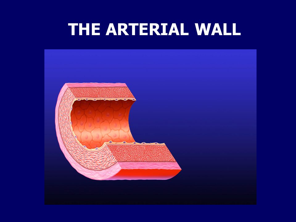 THE ARTERIAL WALL