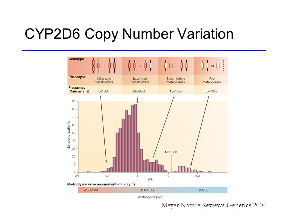 number of variations and the impact of variations Variations in chromosome structure & function ch 8 ðthere is much variation in chromosome abnormalities  complex changes in chromosome structure and number.