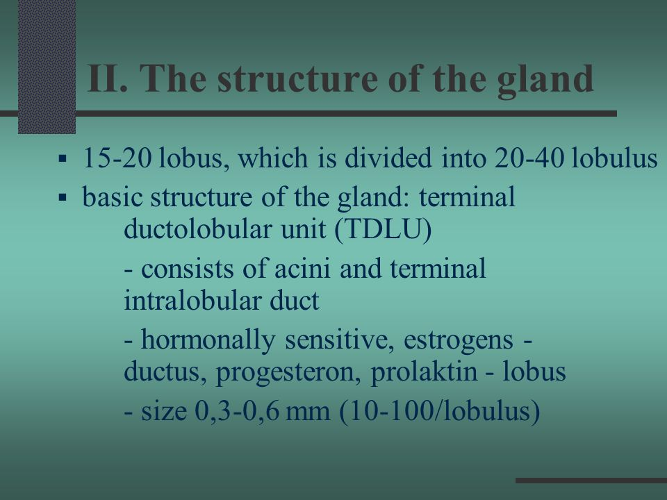II. The structure of the gland