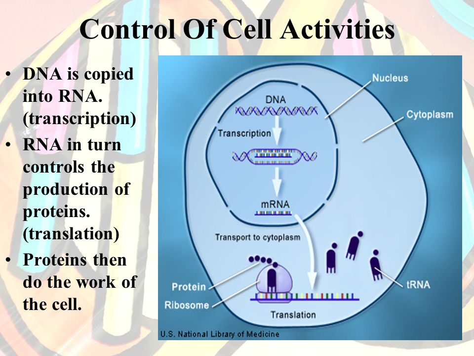 Control Of Cell Activities