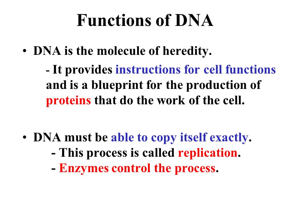 Functions of DNA DNA is the molecule of heredity.