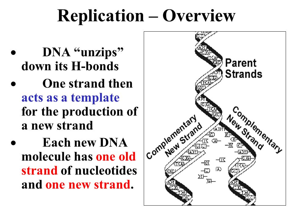 Replication – Overview