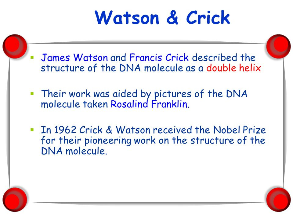 Watson & Crick James Watson and Francis Crick described the structure of the DNA molecule as a double helix.