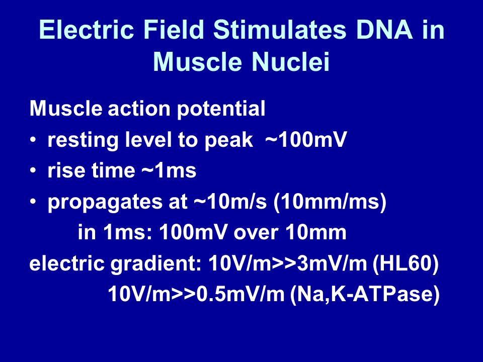 Electric Field Stimulates DNA in Muscle Nuclei