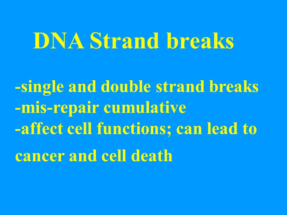 DNA Strand breaks -single and double strand breaks