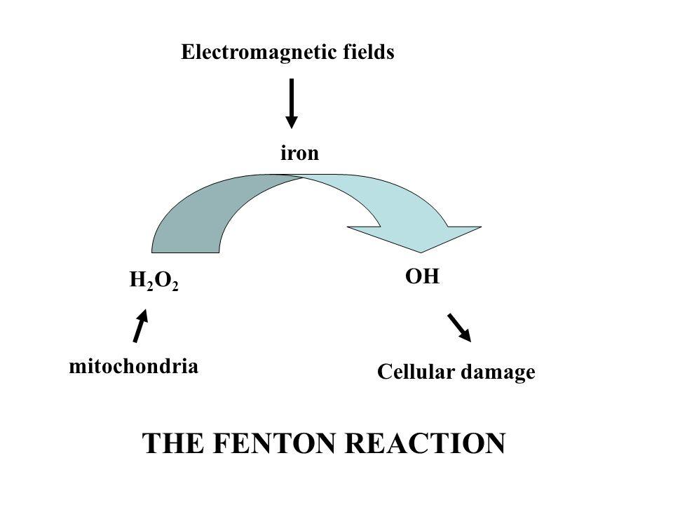 THE FENTON REACTION Electromagnetic fields iron OH H2O2 mitochondria