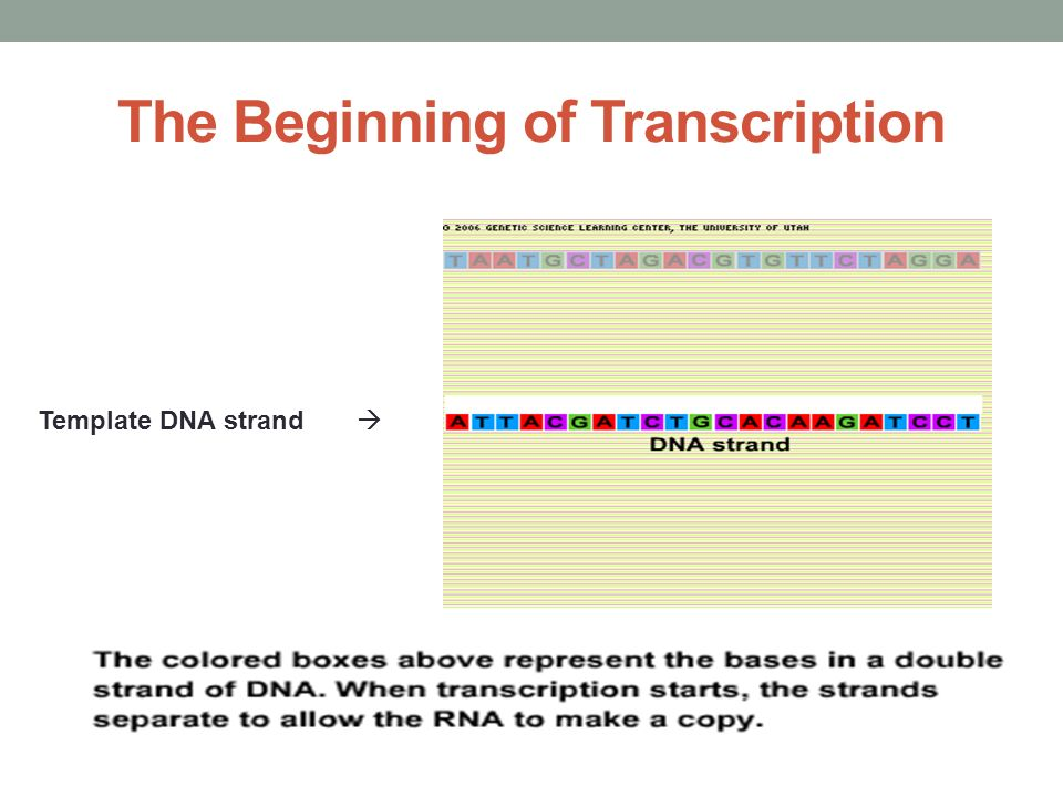 The Beginning of Transcription