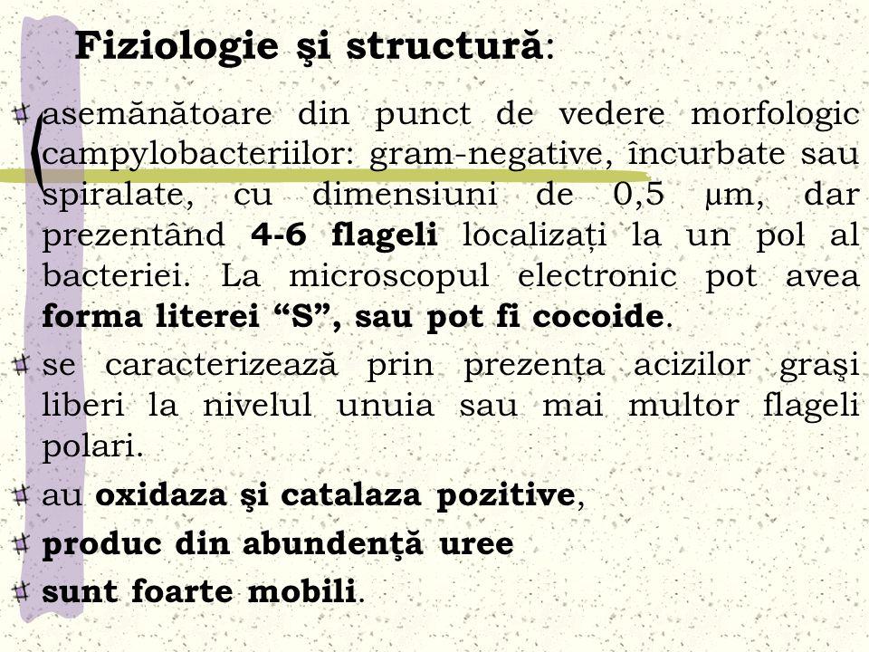 Fiziologie şi structură:
