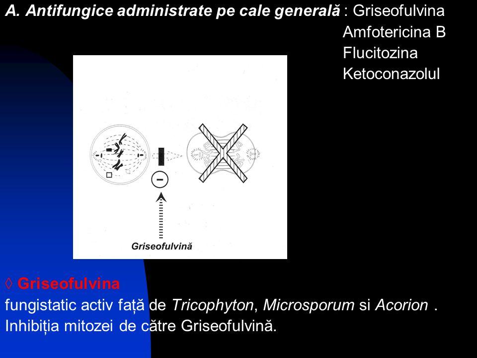 A. Antifungice administrate pe cale generală : Griseofulvina