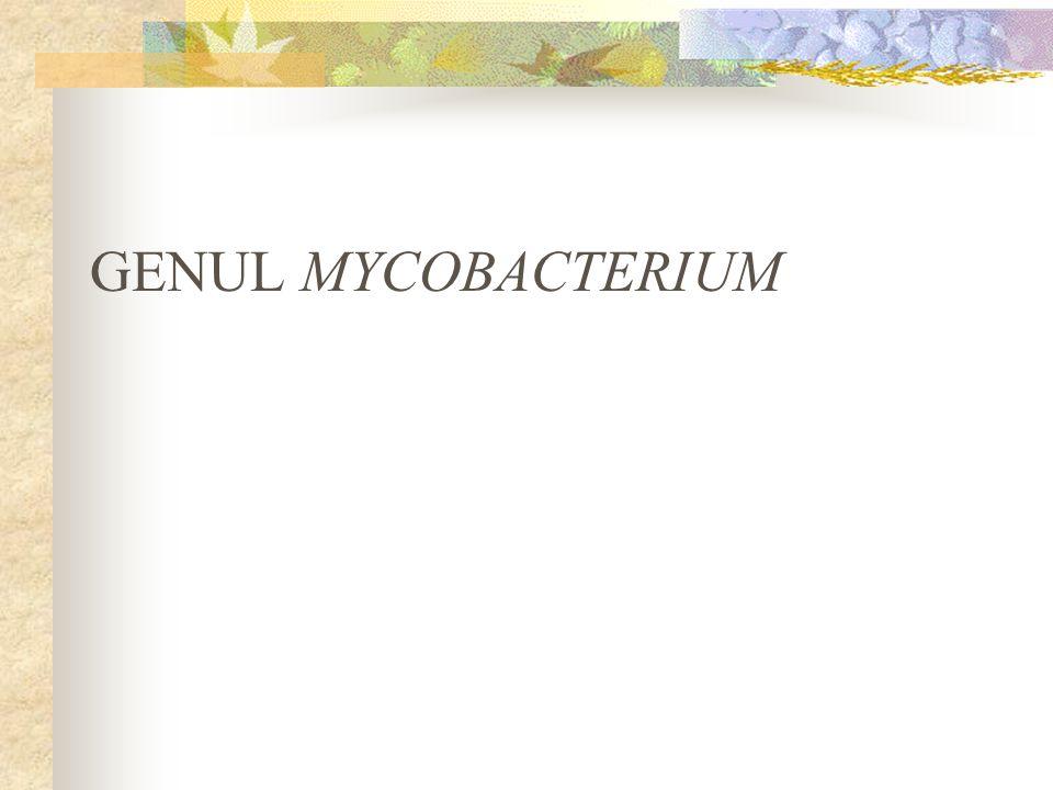 GENUL MYCOBACTERIUM
