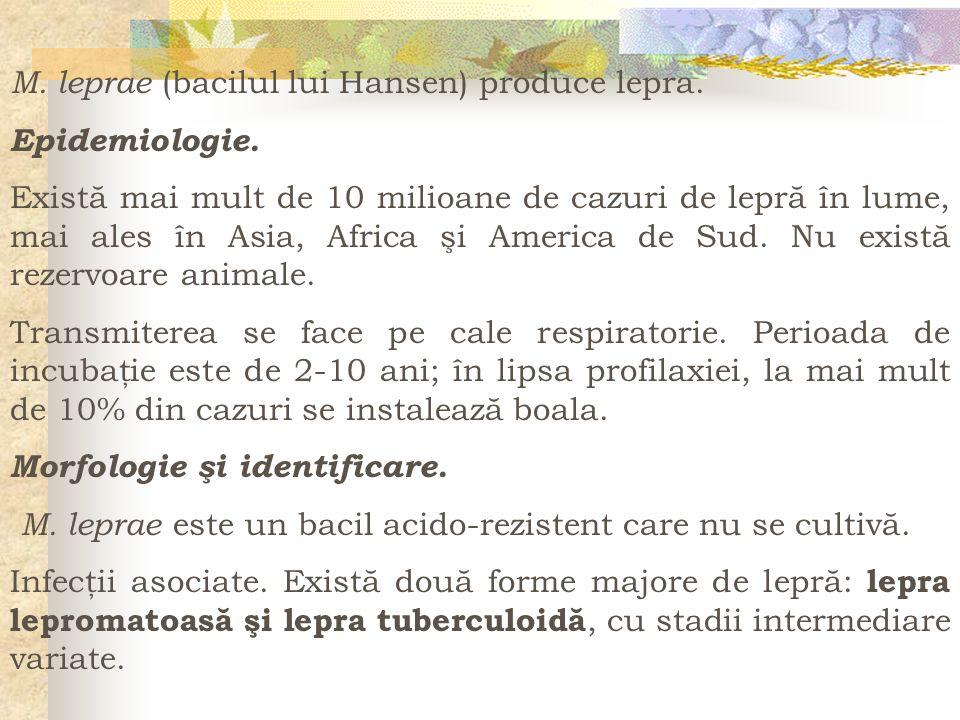 M. leprae (bacilul lui Hansen) produce lepra.