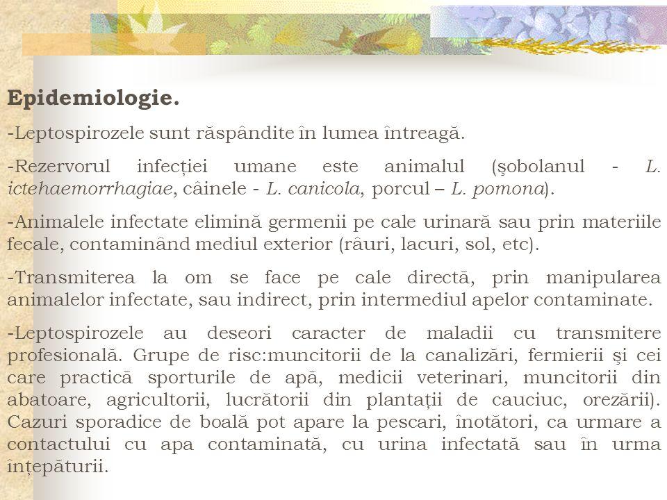Epidemiologie. -Leptospirozele sunt răspândite în lumea întreagă.