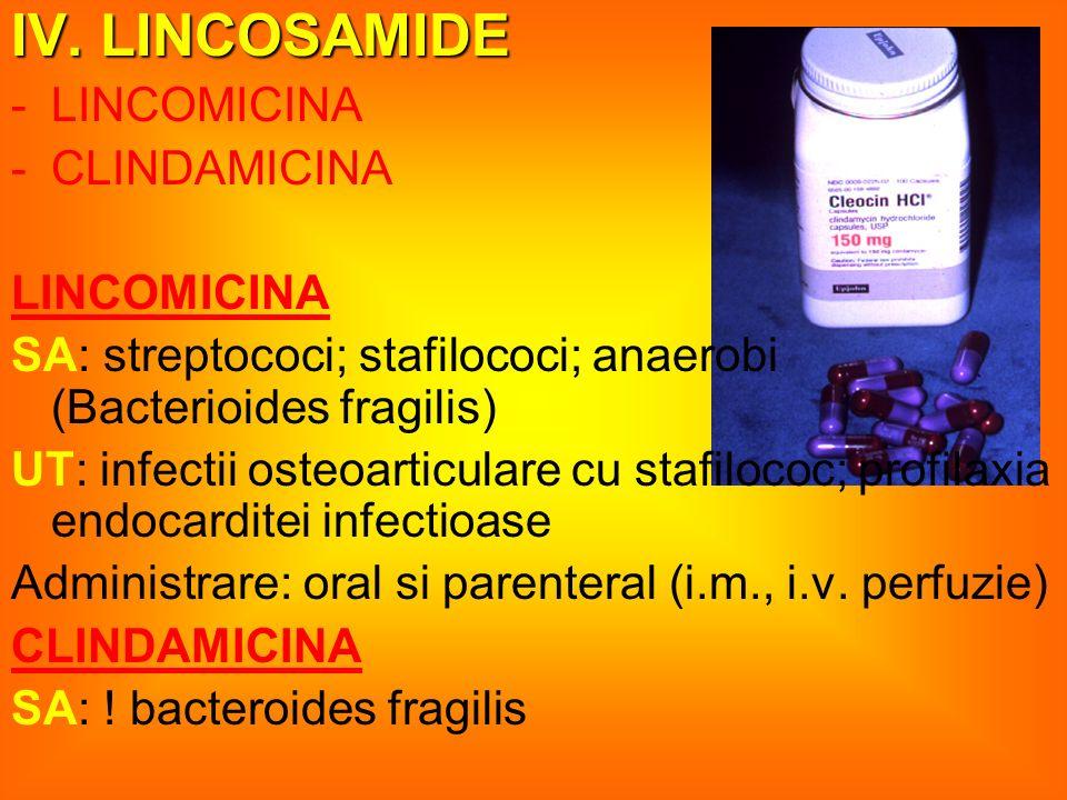 IV. LINCOSAMIDE LINCOMICINA CLINDAMICINA
