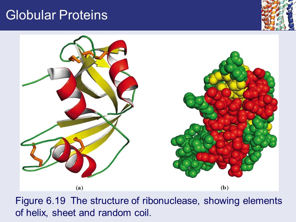 a description of an enzyme as a tertiary globular protein