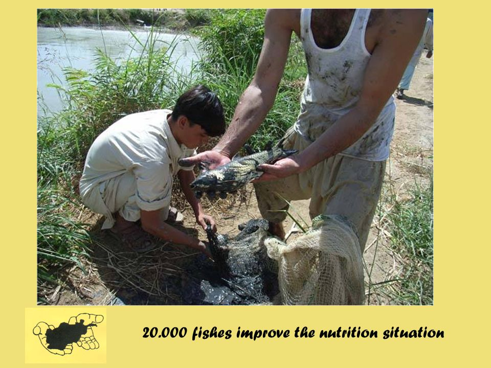 20.000 fishes improve the nutrition situation