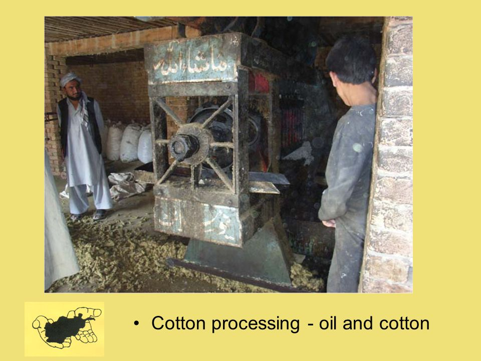 Cotton processing - oil and cotton