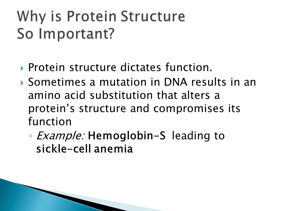 why are proteins important