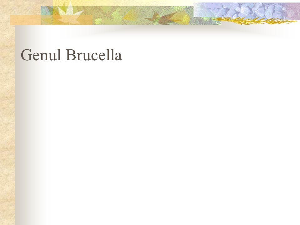 Genul Brucella