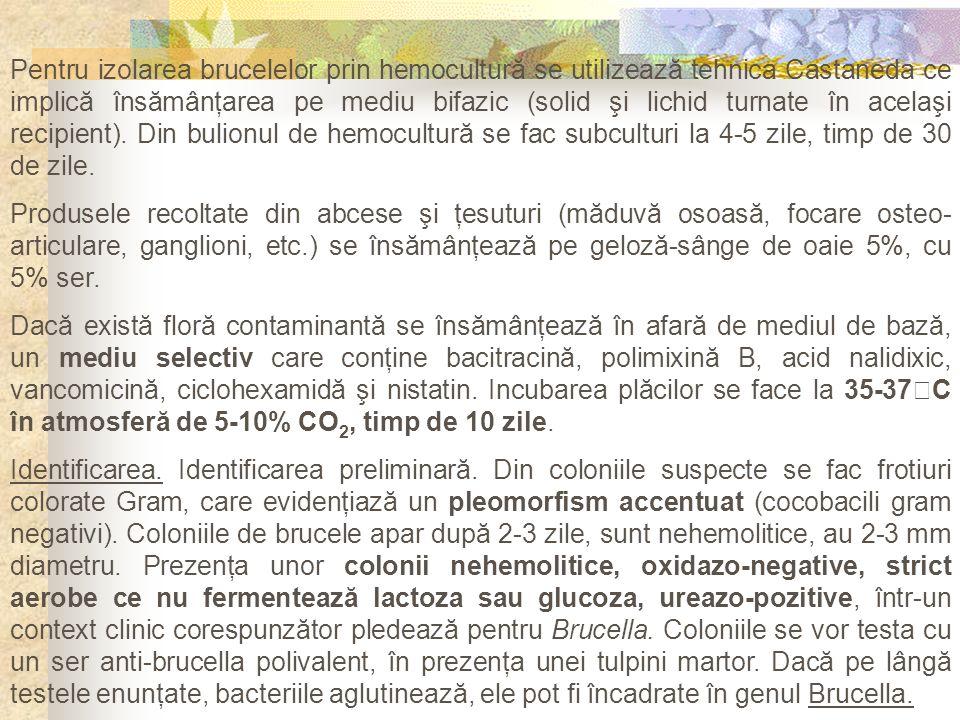 Pentru izolarea brucelelor prin hemocultură se utilizează tehnica Castaneda ce implică însămânţarea pe mediu bifazic (solid şi lichid turnate în acelaşi recipient). Din bulionul de hemocultură se fac subculturi la 4-5 zile, timp de 30 de zile.
