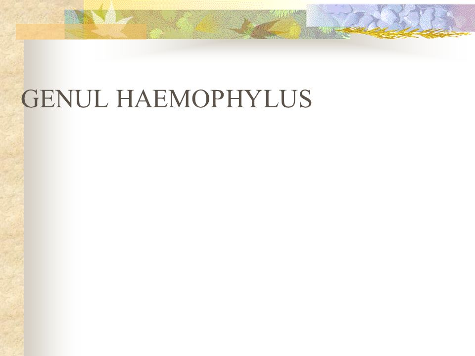 GENUL HAEMOPHYLUS