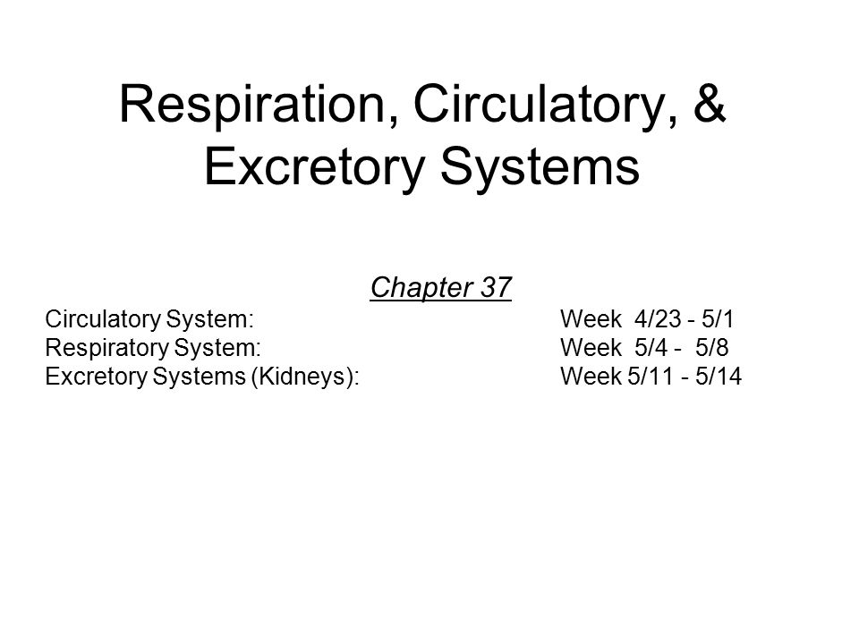 Respiration, Circulatory, & Excretory Systems - ppt video online ...