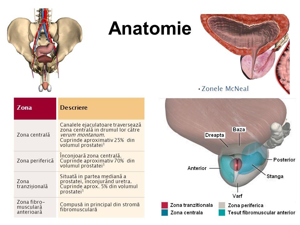 Anatomie Zonele McNeal Zona Descriere Zona centrală