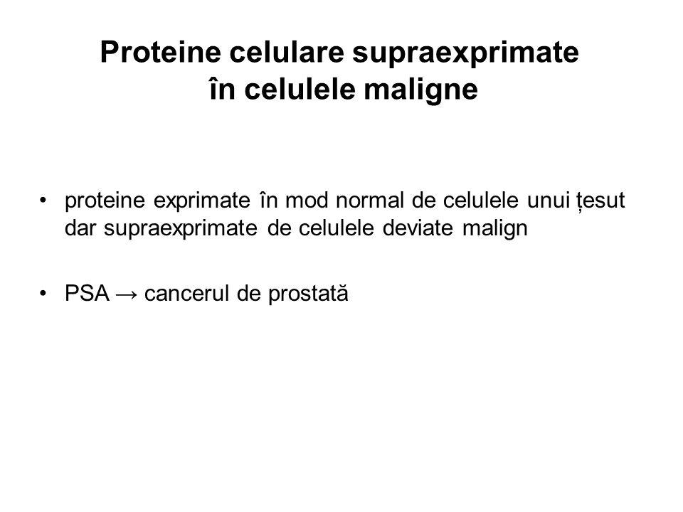 Proteine celulare supraexprimate în celulele maligne