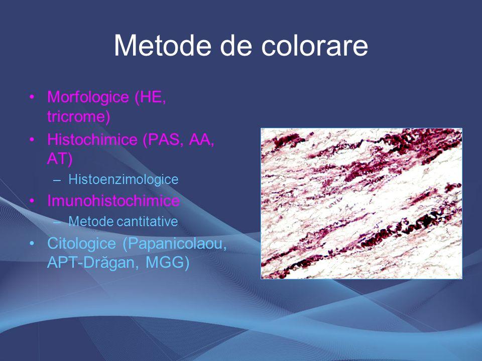 Metode de colorare Morfologice (HE, tricrome)