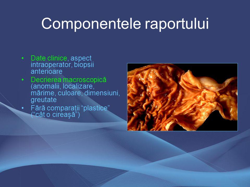 Componentele raportului