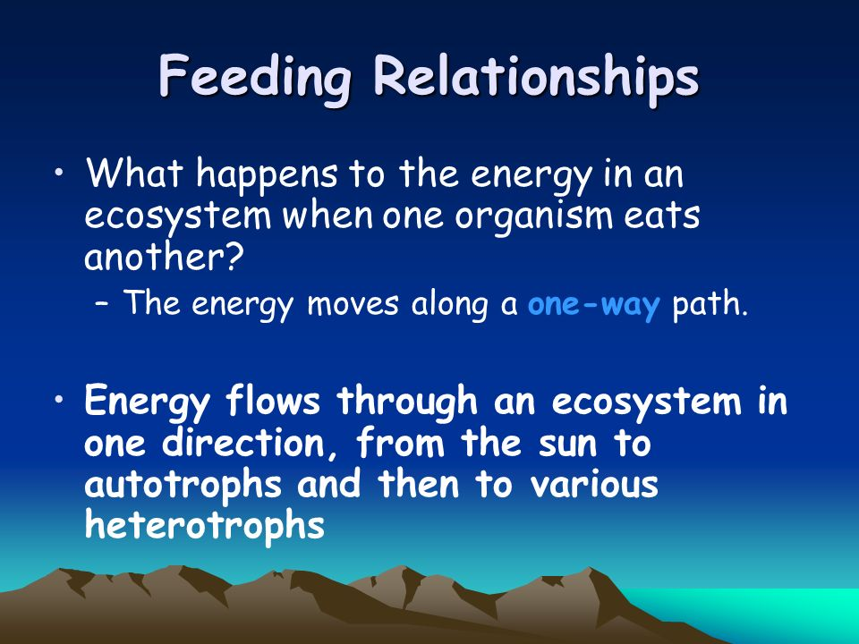 what is a feeding relationship in an ecosystem