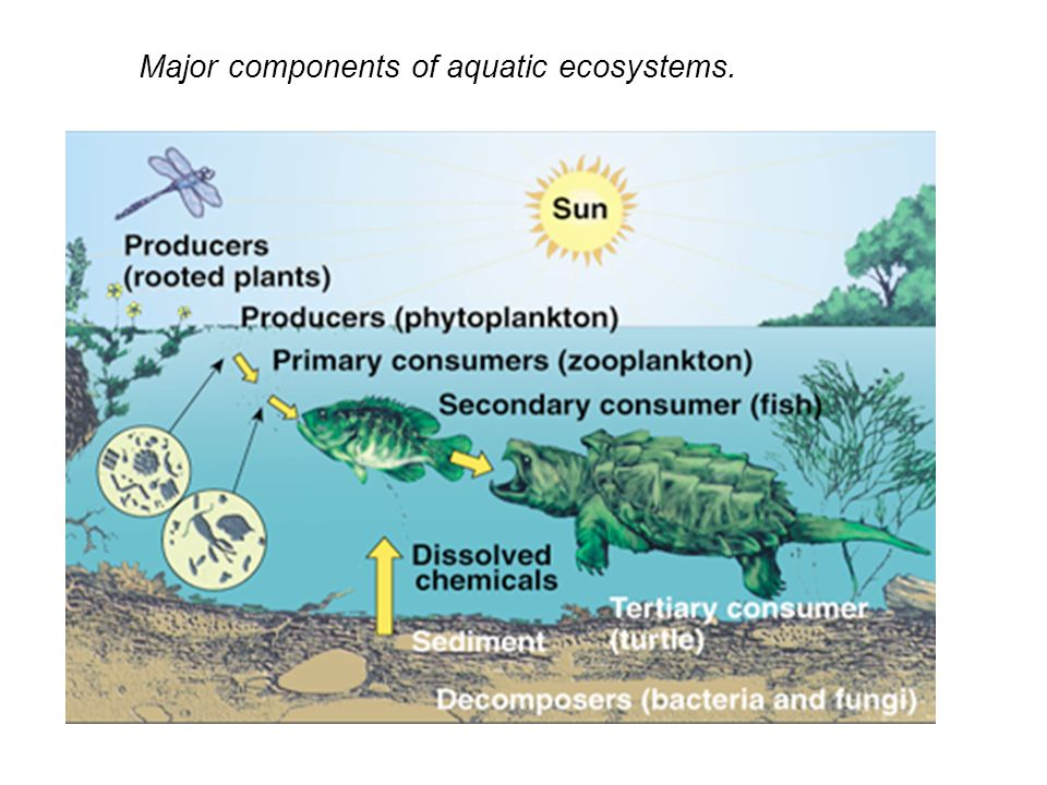 Major components of aquatic ecosystems.