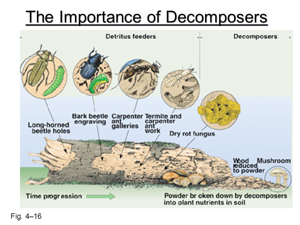 The Importance of Decomposers