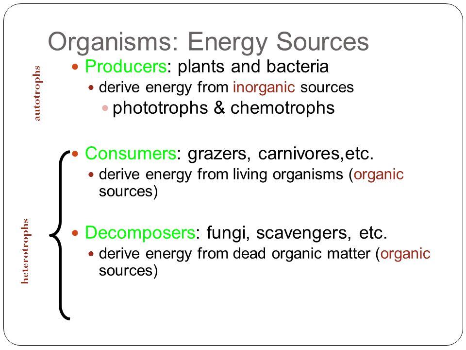Organisms: Energy Sources
