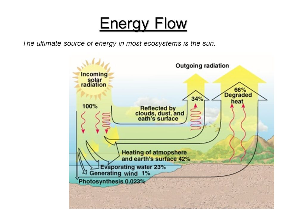 Energy Flow The ultimate source of energy in most ecosystems is the sun.