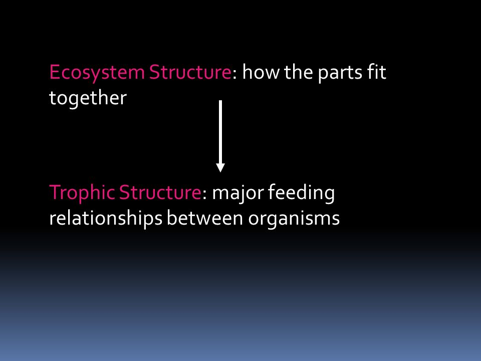 Ecosystem Structure: how the parts fit together